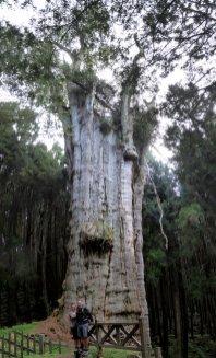 Hep'ie us bij de millenia oude en vooral grote boom! Alishan NP