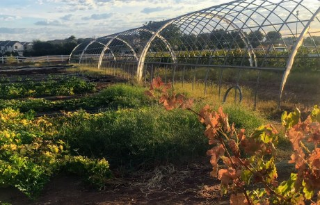 Sustainable food greenhouse from AZSA volunteers
