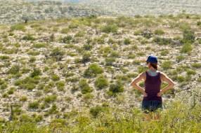 Desert... So much desert.