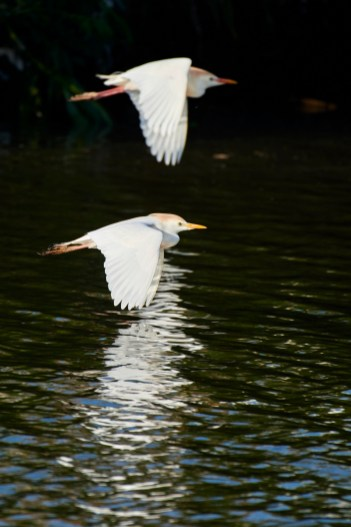 Austin Wildlife Photographer - Taylor Birds - Murphy Park Birds - Austin Photo Workshop