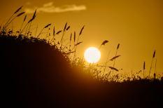 Padre Island Sunset - Dune Grass - Photography Workshop