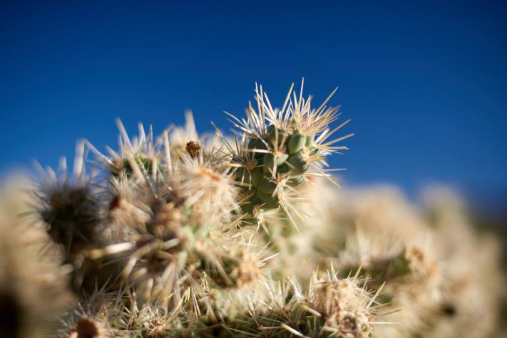 Cactus Spines in Joshua Tree National Park