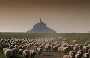L'agneau de pré salé bij de Mont Saint Michel, bron: www.aftouch-cuisine.com