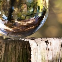 nature reflected in a sphere