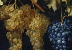 La filosofía del vino