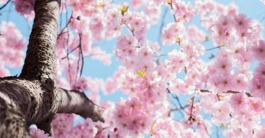 Bitácora espacial: la primavera milenial