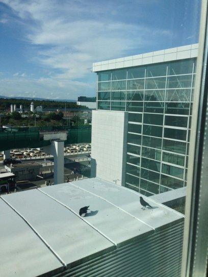 Inno.Hub Fraport 2019: Krähen