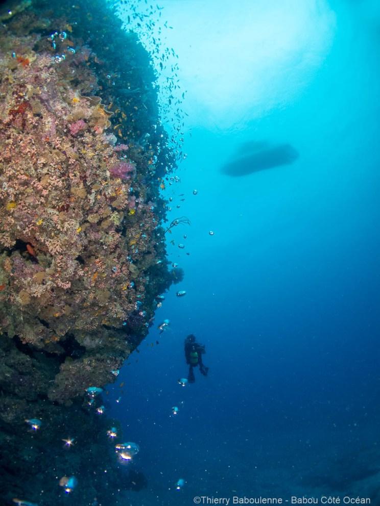 La colonne corallienne s'élance vers la surface
