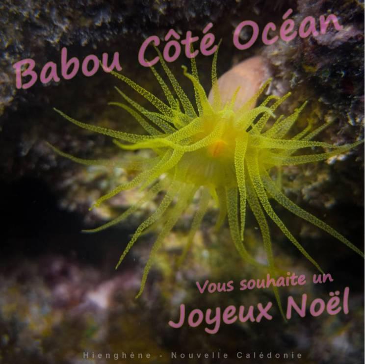 Joyeux Noël à tous de la part de l'équipe de Babou Côté océan