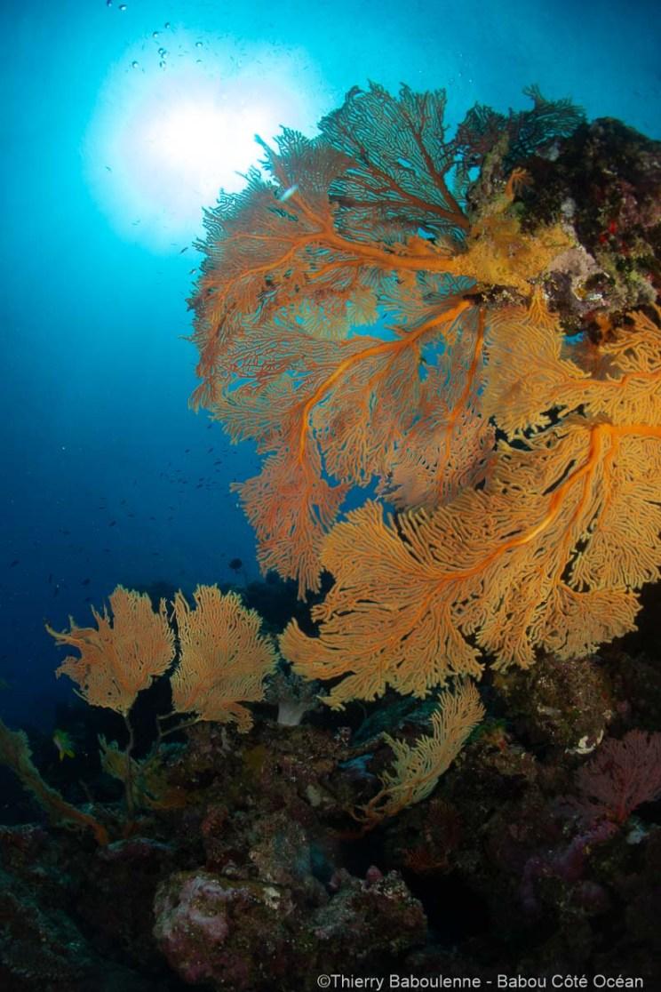 Plonge a Hienghene en Nouvelle Caledonie - Babou Cote Ocean