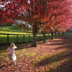 Autumn: A lesson in surrendering