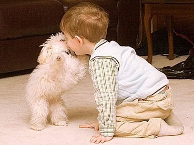 10 razze di cani per bambini piccoli e neonati - barboncino