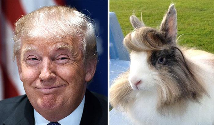 twoshotdonald-trump-funny-look-alike-14__700
