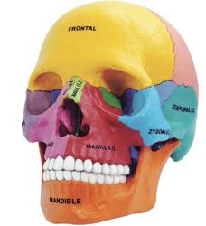 kids science - anatomy