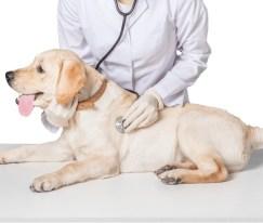 dog at the vet