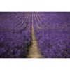 Lavender Field Photography Backdrop