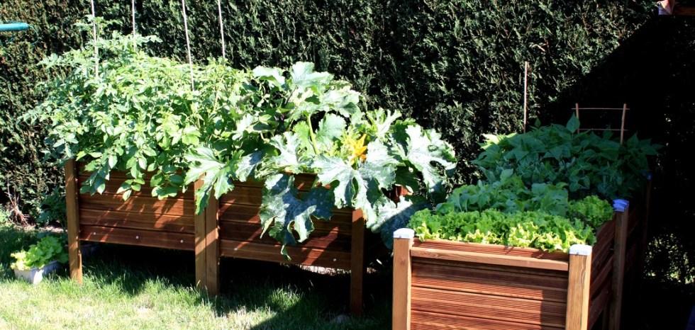 Carré PotagerTomates courgettes salades Papycool- cultiver chez soi