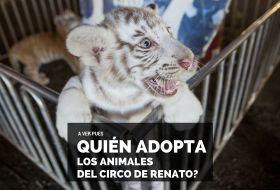 ¿Quién adopta (o sea compra) los animales del Circo de Renato?