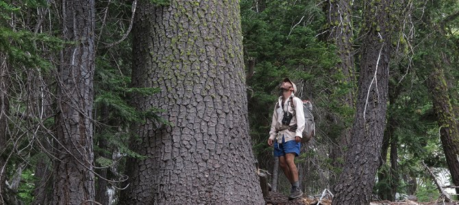 American Forests features Conifer Country