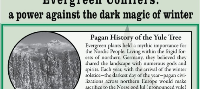 Yule Tree History