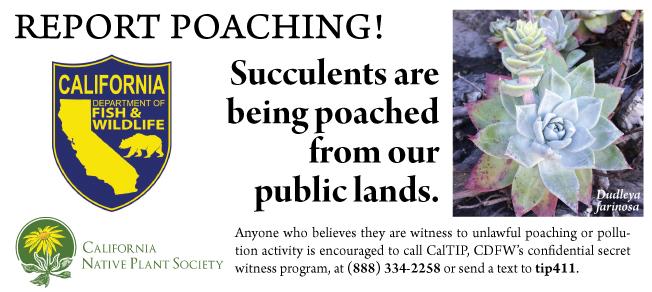 Report Poaching