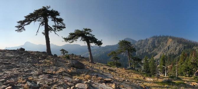 Klamath Mountain Conifers