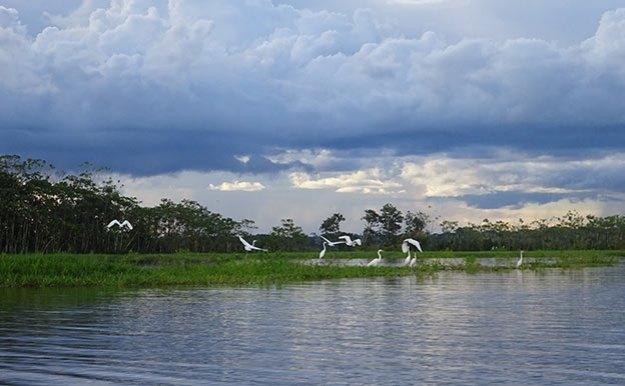 A la recherche des dauphins d'eau douce en en Amazonie