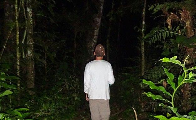 Observer la nuit dans la Selva