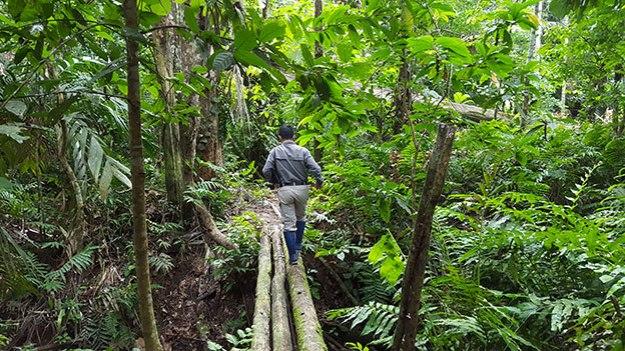 Balade dans la Selva pour trouver le Jaguar