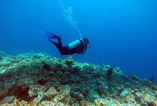 Plonger en Sulawesi