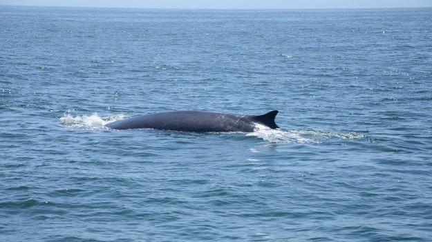 Les Baleines de Long Beach