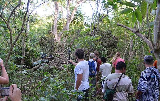Une foule de touristes derrière les singes