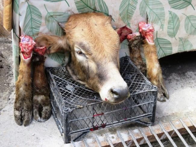 A cows head on the market in Sheki