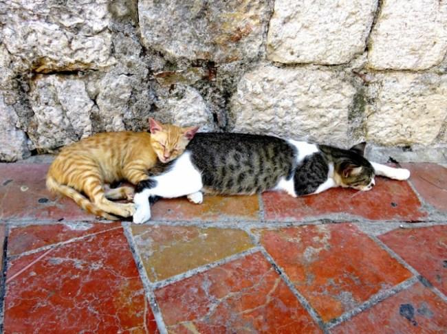 Backpacking Montenegro:cats in Kotor
