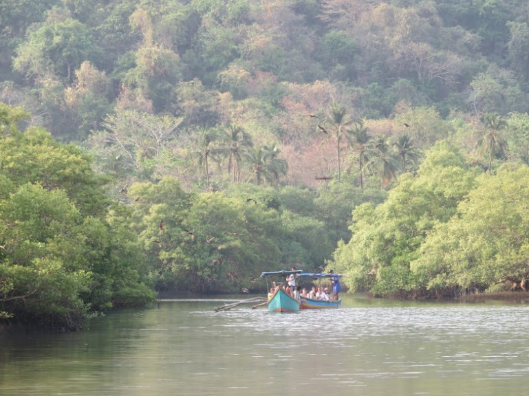 Palolem: Jungles and wildlife in South Goa
