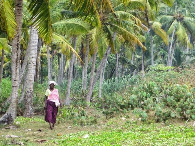 things to do in varkala