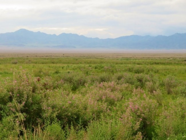 Common views on the steppes when backpacking Kazakhstan