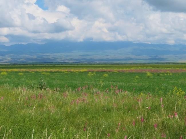 Kazakh flowers in spring