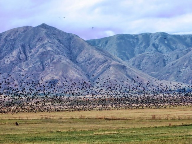 Rural suburbs in Bokonbaevo Kyrgyzstan
