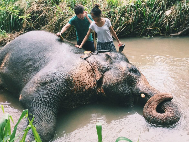 Washing Elephants in Sri Lanka