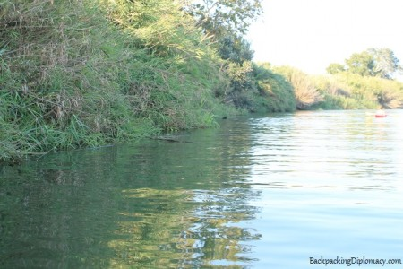 Vegetation in deltebre on the Ebro river