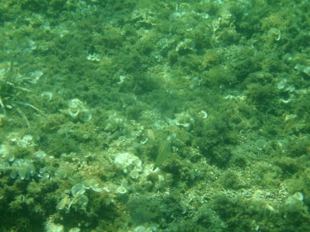 underwater photos of the Mediterranean in Costa Brava