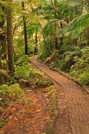Las minas trail in El Yunque Puerto Rico