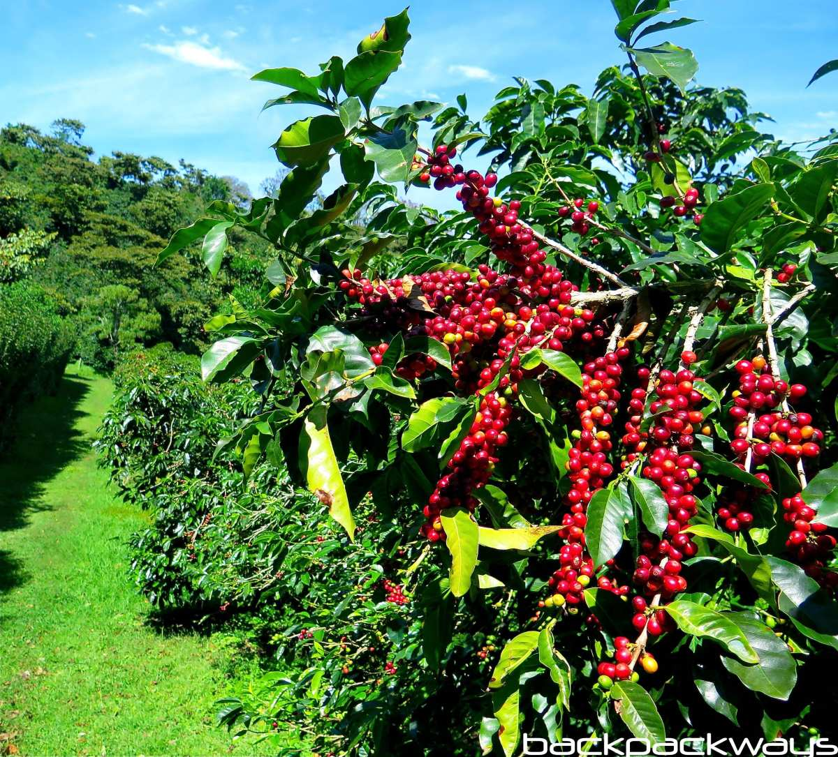 Colombia Coffee Salento Backpackways