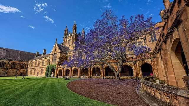 Sydney University, jacaranda