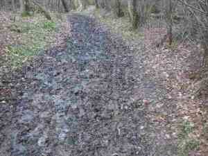 churned bridleway