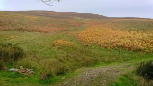 It was like a bracken covered wall