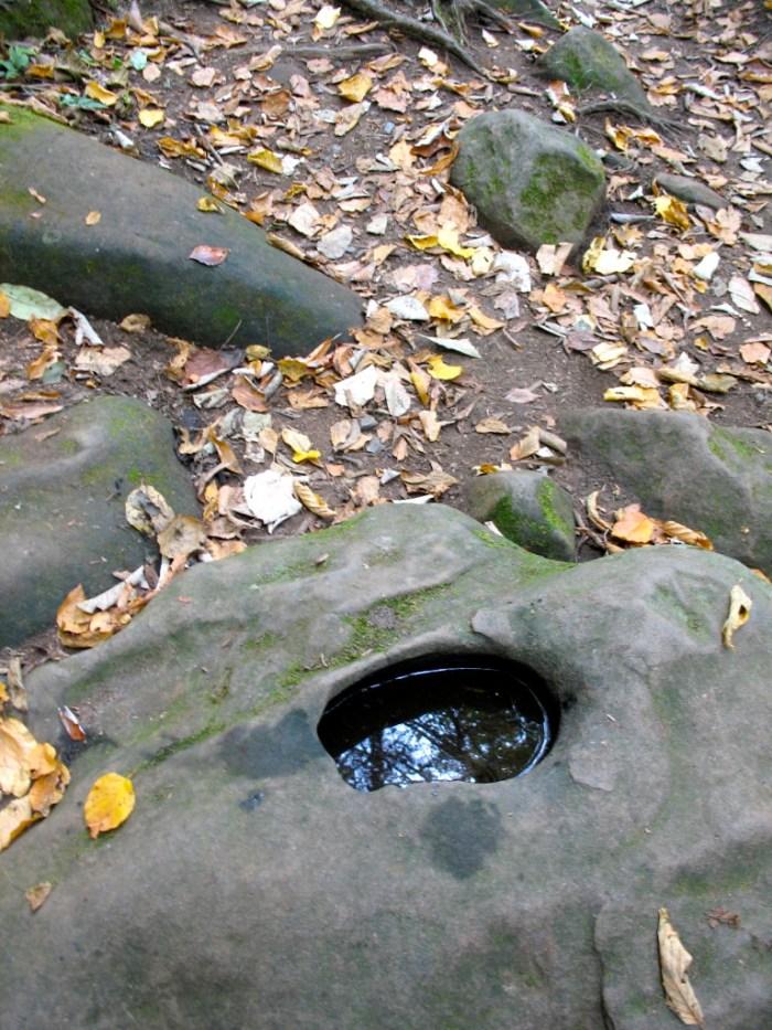 IMG 3841.JPG Version 2 768x1024 - Hike the Joyce Kilmer Memorial Forest