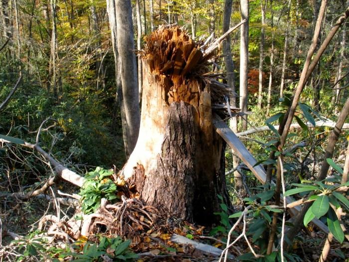 IMG 5846 Version 2 1024x768 - Hike the Joyce Kilmer Memorial Forest