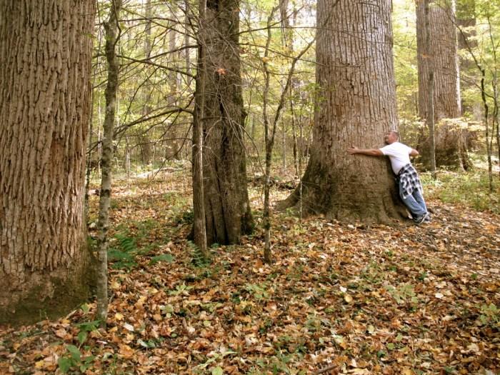 IMG 5851 Version 2 1024x768 - Hike the Joyce Kilmer Memorial Forest